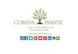 Cubeda piante